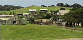 Ace Hi Riding Ranch - Tweed Heads Accommodation