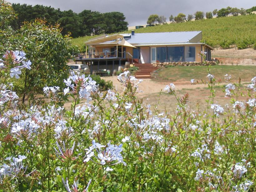 The Blue Grape Vineyard Accommodation - Tweed Heads Accommodation