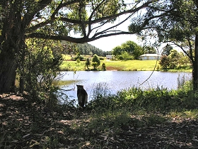 Newry Park Cottage - Tweed Heads Accommodation