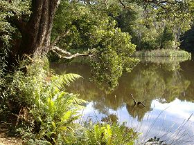 Weldborough Camping Ground - Tweed Heads Accommodation