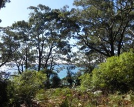 Booderee National Park: Bristol Point Camping Area - Tweed Heads Accommodation