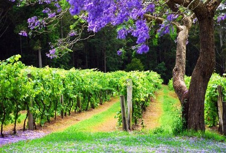 Bago Vineyards - Tweed Heads Accommodation