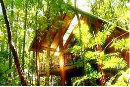 The Canopy Treehouses - Tweed Heads Accommodation
