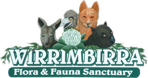 Wirrimbirra Sanctuary - Tweed Heads Accommodation