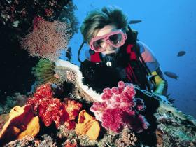 Gold Coast Seaway Dive Site - Tweed Heads Accommodation