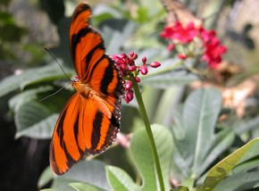Butterfly Farm - Tweed Heads Accommodation