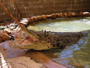Wyndham Zoological Gardens and Crocodile Park - Tweed Heads Accommodation