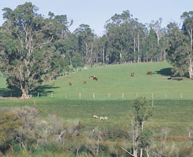 Scenic Drives - Bunbury Collie Donnybrook - Tweed Heads Accommodation