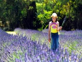 Brayfield Park Lavender Farm - Tweed Heads Accommodation