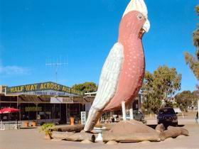 The Big Galah - Tweed Heads Accommodation