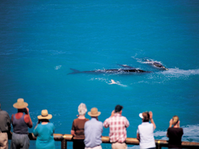 Whale Watching At Head Of Bight - Tweed Heads Accommodation