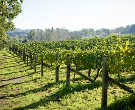 Surveyor's Hill Vineyards - Tweed Heads Accommodation