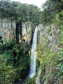 Gondwana Rainforests of Australia - Tweed Heads Accommodation