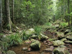 Amamoor State Forest - Tweed Heads Accommodation