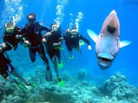 Jew Shoal Dive Site - Tweed Heads Accommodation