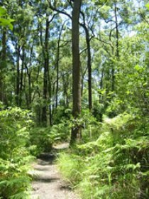 Mapleton Falls National Park - Tweed Heads Accommodation