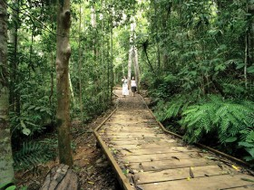 Lake Barrine Circuit Track Crater Lakes National Park - Tweed Heads Accommodation