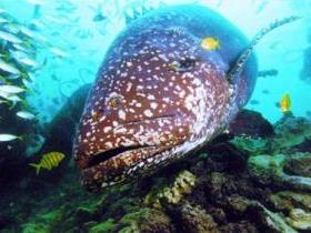 Lady Musgrave Island Dive Sites - Tweed Heads Accommodation