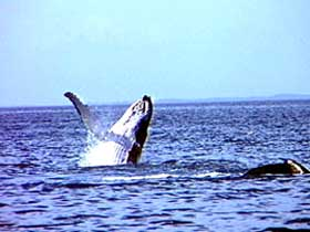 Whale Watching - Tweed Heads Accommodation