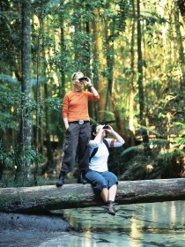 Birdwatching on the Fraser Coast - Tweed Heads Accommodation