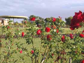 Elizabeth Park Rose Gardens - Tweed Heads Accommodation
