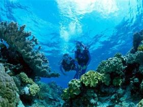 Coral Gardens Dive Site - Tweed Heads Accommodation