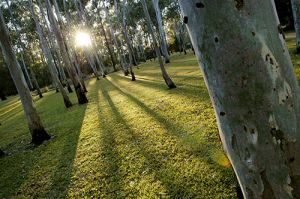 Tondoon Botanic Gardens - Tweed Heads Accommodation