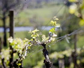 Elan Vineyard and Winery - Tweed Heads Accommodation