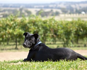 Moothi Estate Vineyard and Cellar Door - Tweed Heads Accommodation