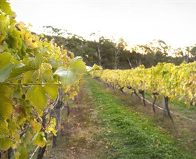 Harcourt Valley Vineyards - Tweed Heads Accommodation