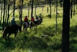 Hunter Valley Horse Riding and Adventures - Tweed Heads Accommodation