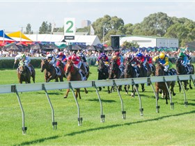 Morphettville Racecourse - Tweed Heads Accommodation