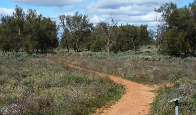Grasslands Nature trail - Tweed Heads Accommodation