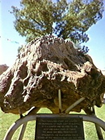 Fossilised Tree - Tweed Heads Accommodation