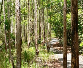 Hallorans Hill Conservation Park - Tweed Heads Accommodation