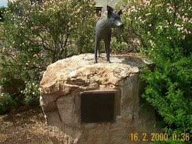 Dingo Statue - Tweed Heads Accommodation
