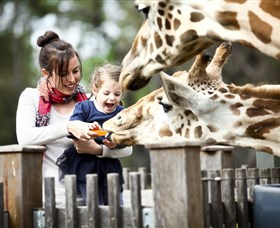 Taronga Western Plains Zoo Dubbo - Tweed Heads Accommodation