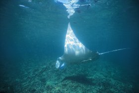Manta Ray Bay Dive Site - Tweed Heads Accommodation