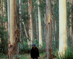 Blue Gum Forest - Tweed Heads Accommodation