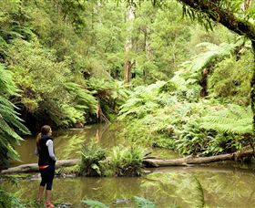 Morwell National Park - Tweed Heads Accommodation