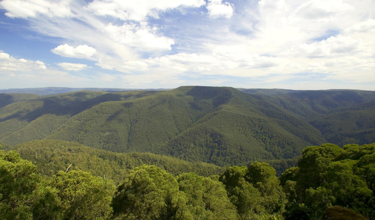 Barrington Tops National Park - Tweed Heads Accommodation