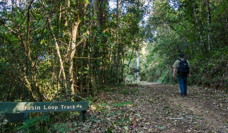 Basin Loop track - Tweed Heads Accommodation