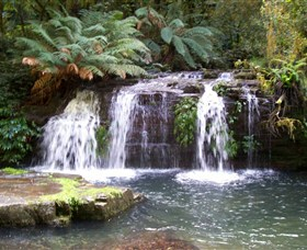 Barrington Tops National Park Walks - Tweed Heads Accommodation
