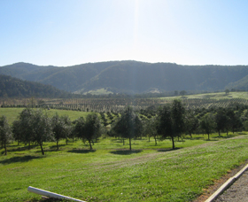Hastings Valley Olives - Tweed Heads Accommodation