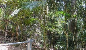 Goorgana walking track - Tweed Heads Accommodation