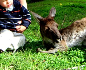 Bunbury Wildlife Park - Tweed Heads Accommodation