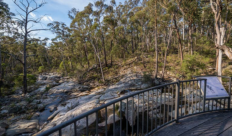 Myanba Gorge walking track - Tweed Heads Accommodation