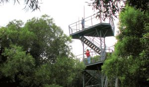 Cape Hawke lookout - Tweed Heads Accommodation