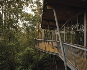 Tarkine Forest Adventures - Dismal Swamp - Tweed Heads Accommodation