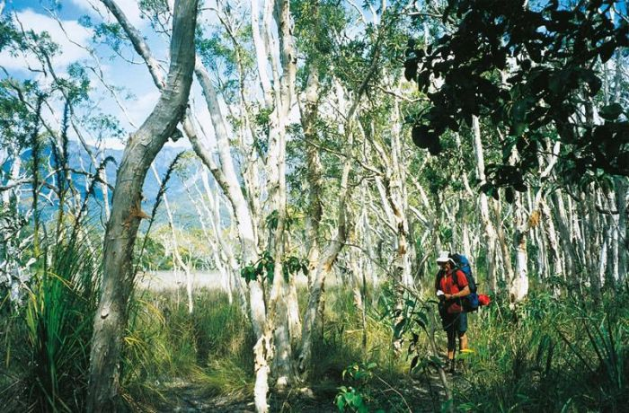 Thorsborne Trail Hinchinbrook Island National Park - Tweed Heads Accommodation